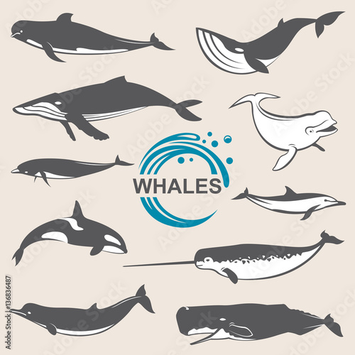 Fotografie, Tablou  collection of various whales species images