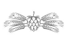 Black Illustration Of Hop And Barley Ear For Brewing