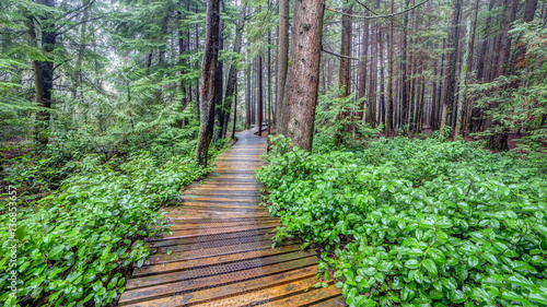 Foto op Plexiglas Groene Trail in a Lush and green British Columbia Forest