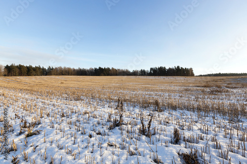 Fotobehang Lichtblauw field covered with snow