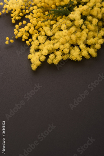 Mimosa flowers on black background