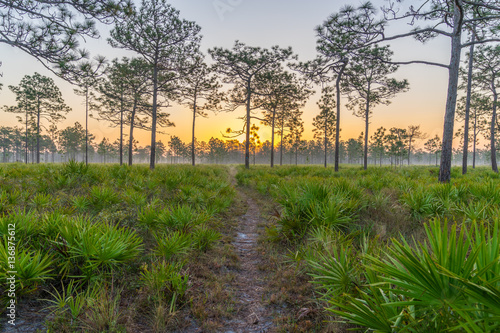Early Morning Hike Through Central Florida
