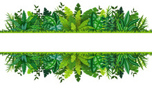 Illustration Of A Tropical Rainforest Banner