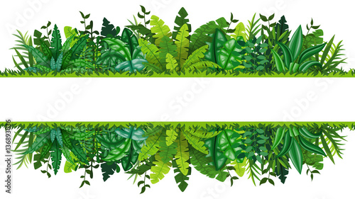 Photo  Illustration of a tropical rainforest banner