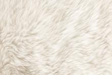 Fur Texture./Fur Texture
