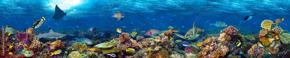 Fototapety, obrazy: colorful super wide underwater coral reef panorama  banner background with many fishes turtle shark and marine life