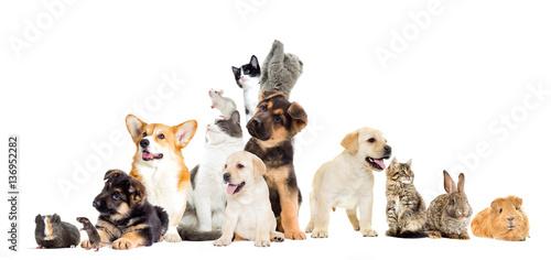 Naklejki zwierzęta  set-pet-looks