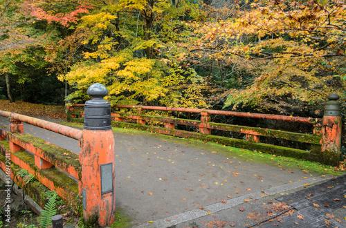 Papiers peints Corail Japanese autumn color of maple tree with red bridge