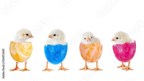 Staande foto Kip Ostern: Hühnerküken in der Reihe