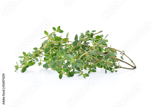 lemon thyme isolated on white background
