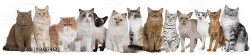Foto  Große Katzengruppe mit mehreren Katzen nebeneinander sitzend