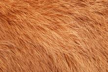 Orange Rabbit Fur As Background