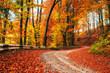 autumn alley. Beauty world. Carpathians Ukraine Europe