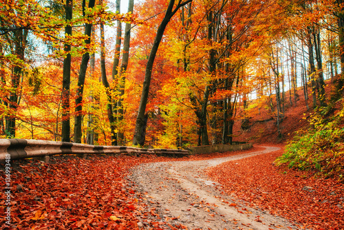 Poster Route dans la forêt autumn alley. Beauty world. Carpathians Ukraine Europe