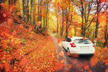 Car On A Forest Path. Beautiful Road In Mountains. Carpathian