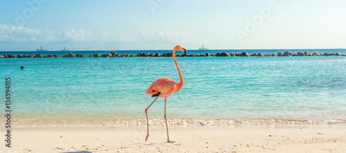Fotobehang Flamingo Flamingo on the beach. Aruba island