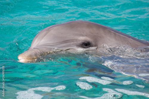 In de dag Dolfijn Delfin im Meer