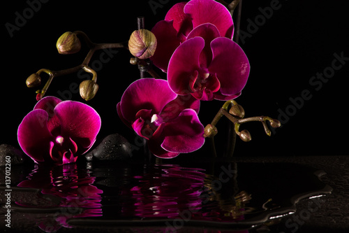 Czerwone orchidee z wodnym odbiciem