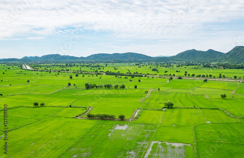 Fotobehang Rijstvelden Arial view of green rice view in countryside under blue sky and