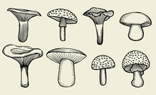 Hand-drawn Vintage Mushrooms