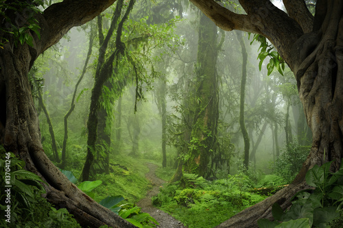 Poster Weg in bos Deep tropical jungles of Nepal