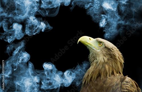 Poster Aigle eagle on smoke background closeup