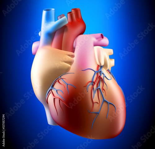 anatomia-ludzkiej-kierowej-miekkiej-pojecia-3d-ilustracja