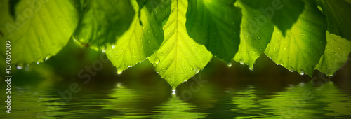 Photo  Panoramic view of green leafs with raindrop. Reflecting in water