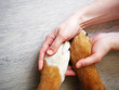 Dog paws and human hand close up, top view. Conceptual image of friendship, trust, love, the help between the person and a dog