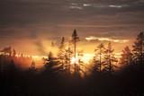 Fototapeta Forest - Premières lueurs