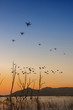 drones flying with bevy of birds over dead trees in the lake at sunset scenery