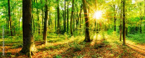 Fototapeten Wald Wald im Frühling mit Sonne