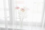 gerbera beautiful flowers on a white background.