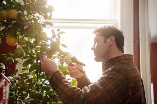 Man pruning orange tree