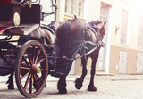 Fototapeta Konie - Horse and a beautiful old carriage in old town.