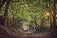 Halnaker Ancient Green Lane In West Sussex In Autumn