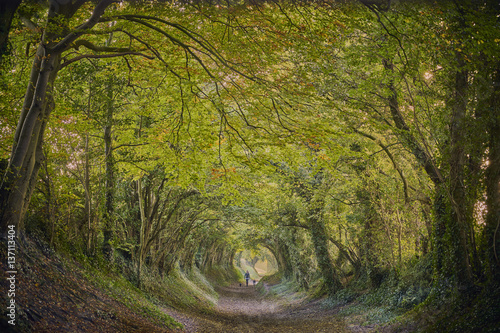 Photo Stands Road in forest Halnaker ancient green lane in West Sussex in autumn with walker and dogs