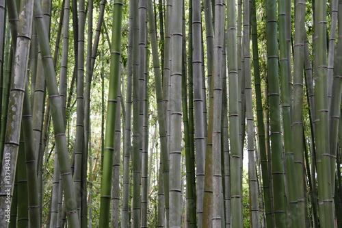 Foto op Plexiglas Bamboe 竹林97