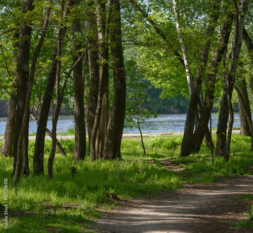 Foto op Canvas Weg in bos Pathway in the shade of park trees along rowing canal.