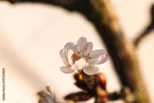 Fototapeta Frühling Spring obraz na płótnie