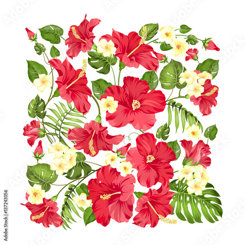 Awesome pattern of Tropical flowers. Blossom flowers of hibiscus. Monstera leaves in rectangle frame isolated over white background. Vector illustration.