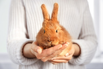 Woman holding cute fluffy rabbit, closeup
