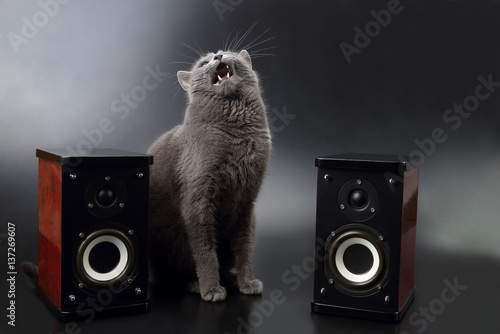Fotomural  gray cat with open mouth singing with two stereo audio speakers.