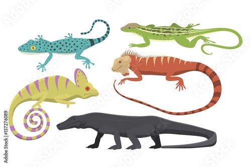 Valokuvatapetti Different kind of lizard reptile isolated vector illustration.