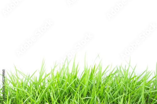 Foto auf Gartenposter Landschappen Green grass on white background