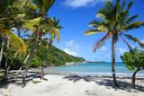 Fototapeta See - palmier sur la plage au bord de mer en guadeloupe
