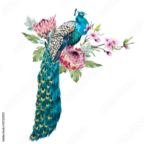 Watercolor peacock with flowers Wall mural