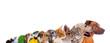 Leinwandbild Motiv Reihe unterschiedliche Haustiere – Köpfe im Profil