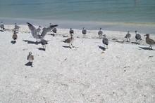 Vögel Strand Captive Island