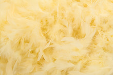 Soft Yellow Feathers From A Boa In A Full Frame Image
